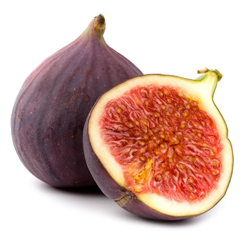 FIGS-IMPORT-EXPORT-international