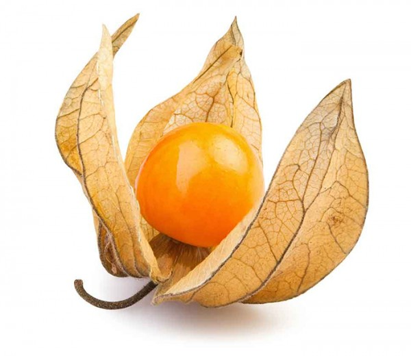 Physalis-import-export-germany-EU