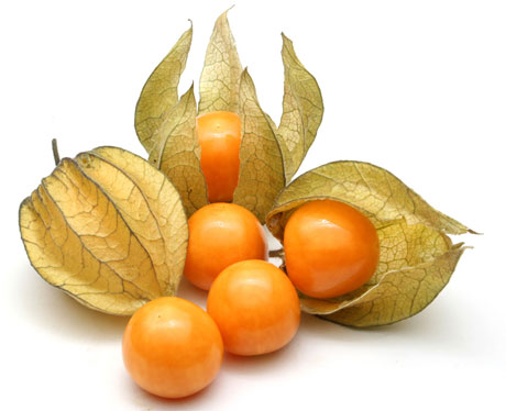 Physalis import export