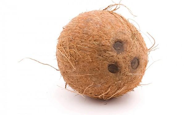 coconut-export