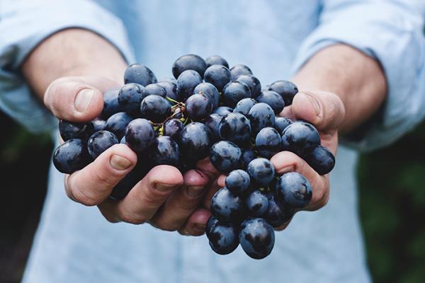 export-grapes-company