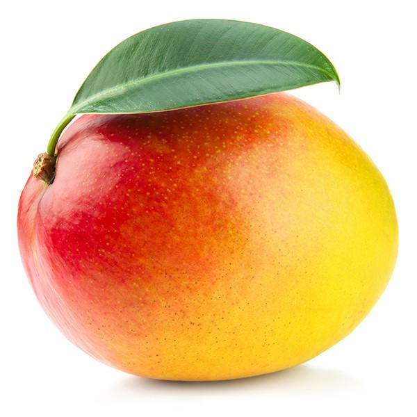 import-export-mango